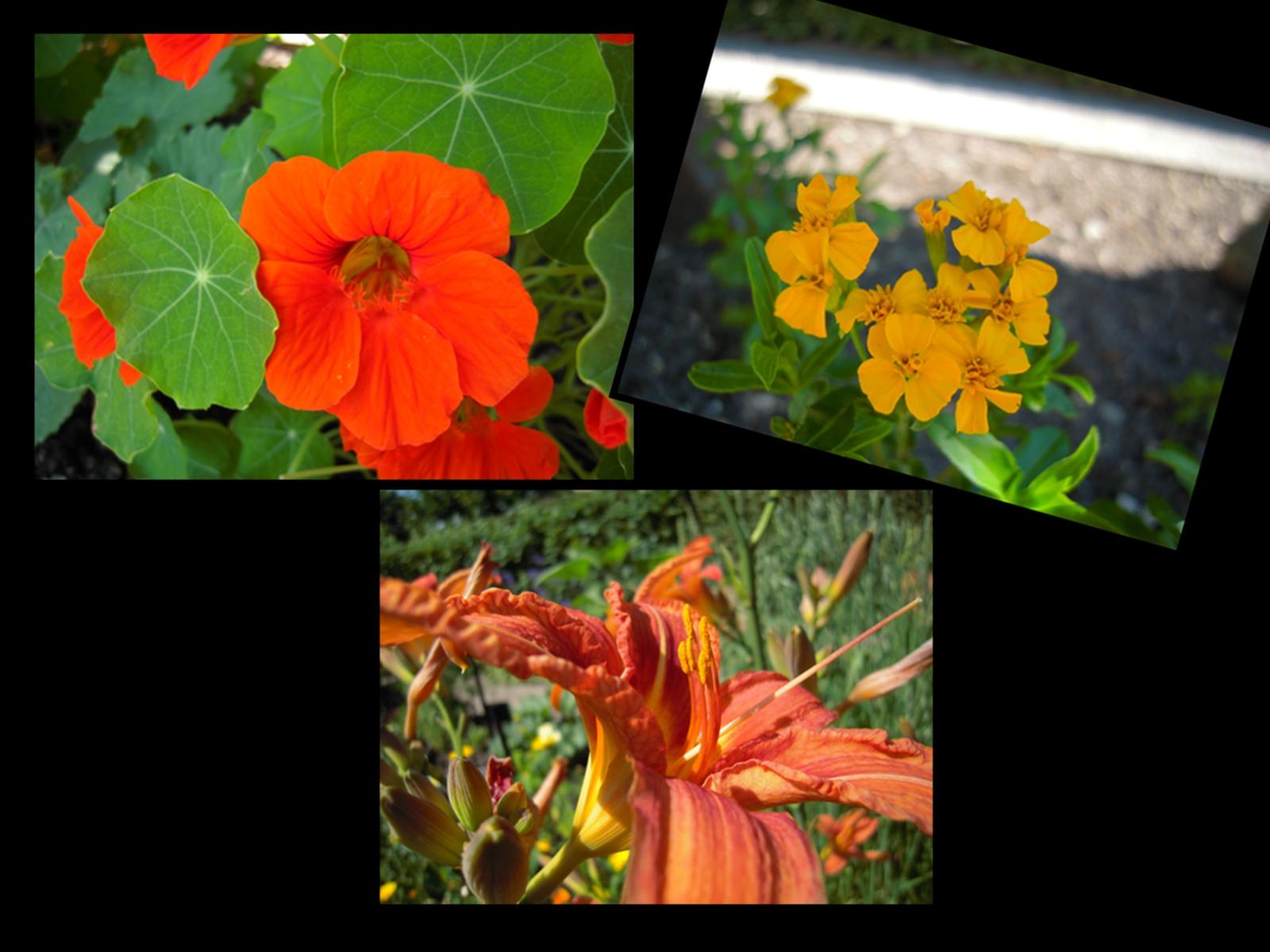 les fleurs comestibles le jardin des cinq sens yvoire. Black Bedroom Furniture Sets. Home Design Ideas