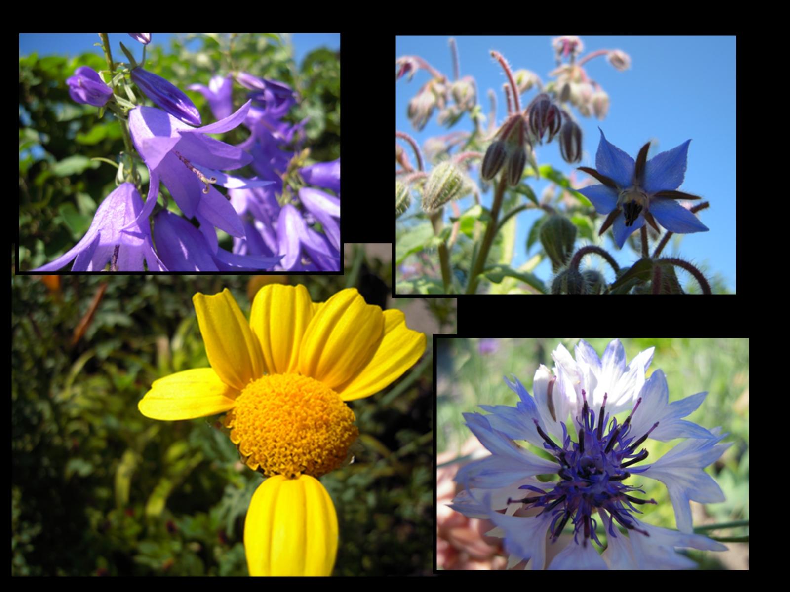 Le blog du jardin yvoire le jardin des cinq sens for Fleurs dans le jardin
