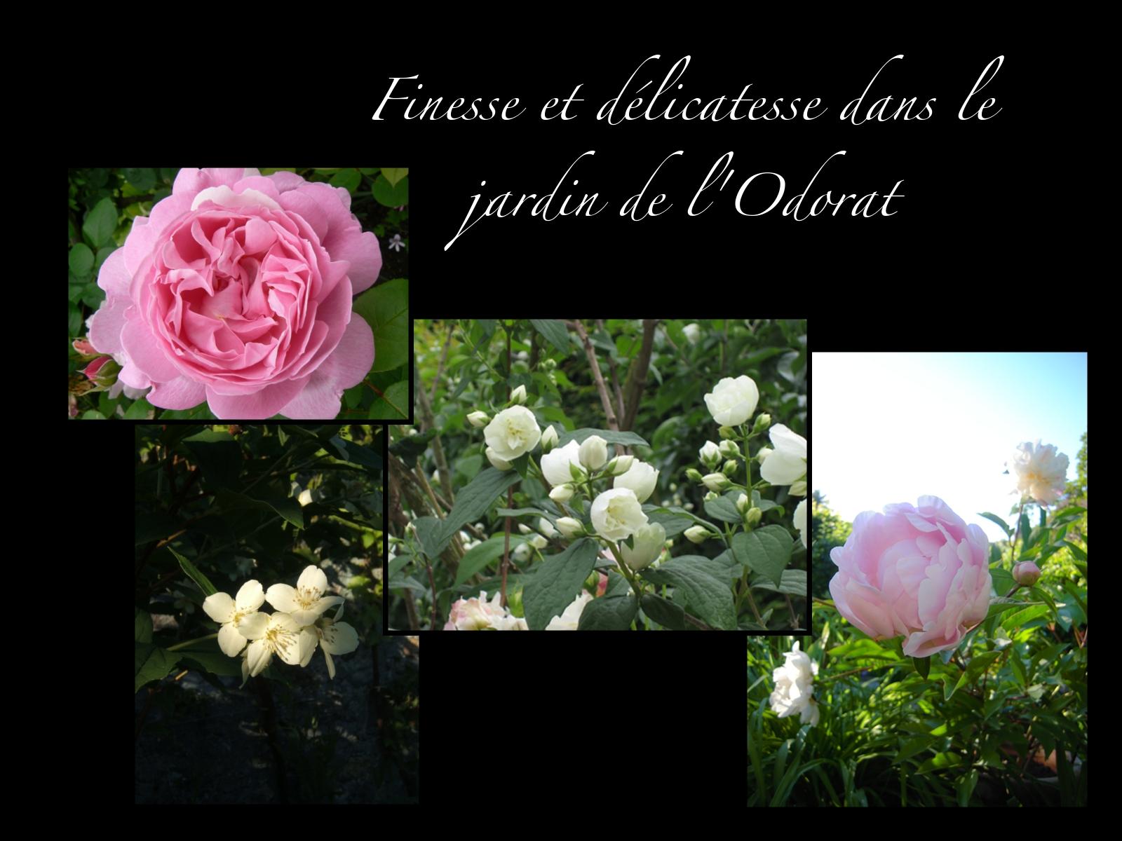 Les fleurs de d but juin le jardin des cinq sens yvoire for Fleurs au jardin