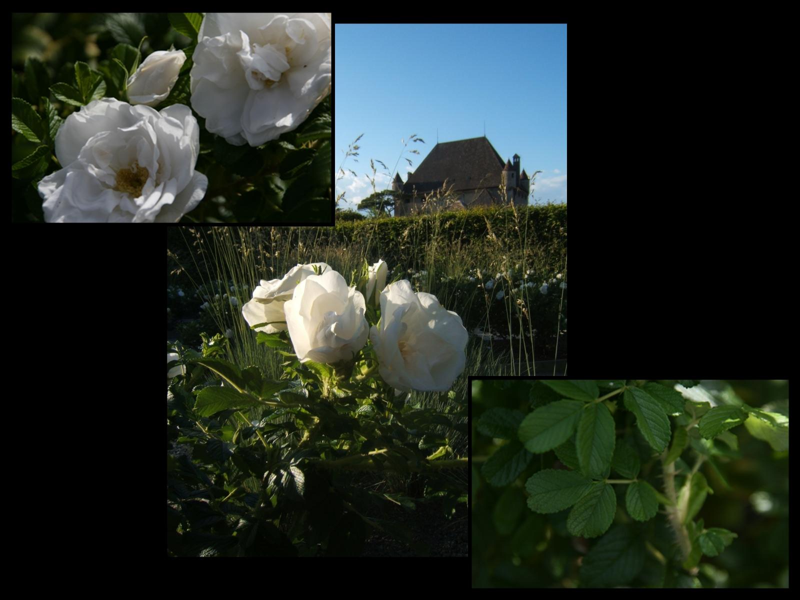 Le jardin des cinq sens yvoire 2 4 jardin for Entretien jardin du souvenir