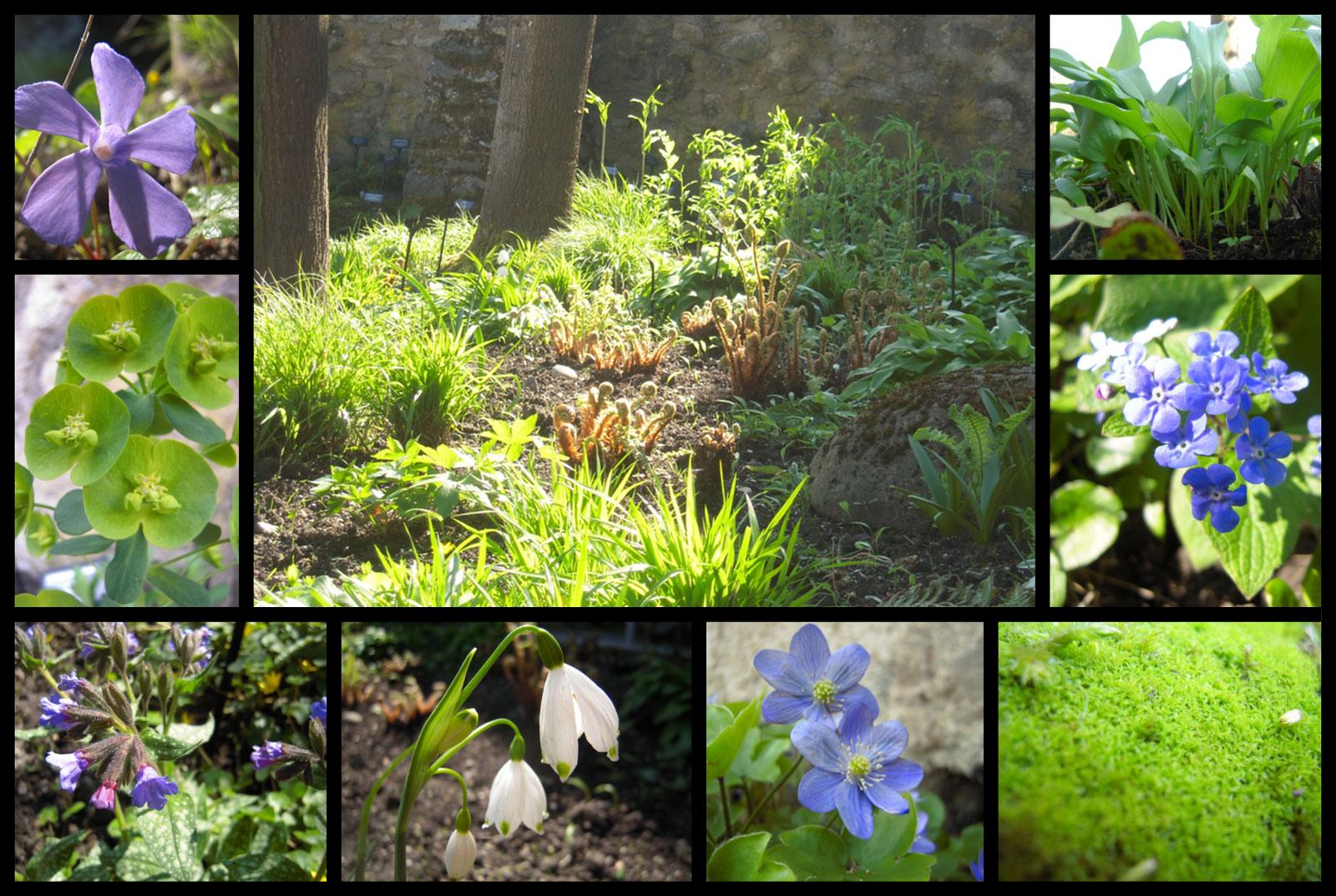 Plantes de sous bois for Jardin du plantes