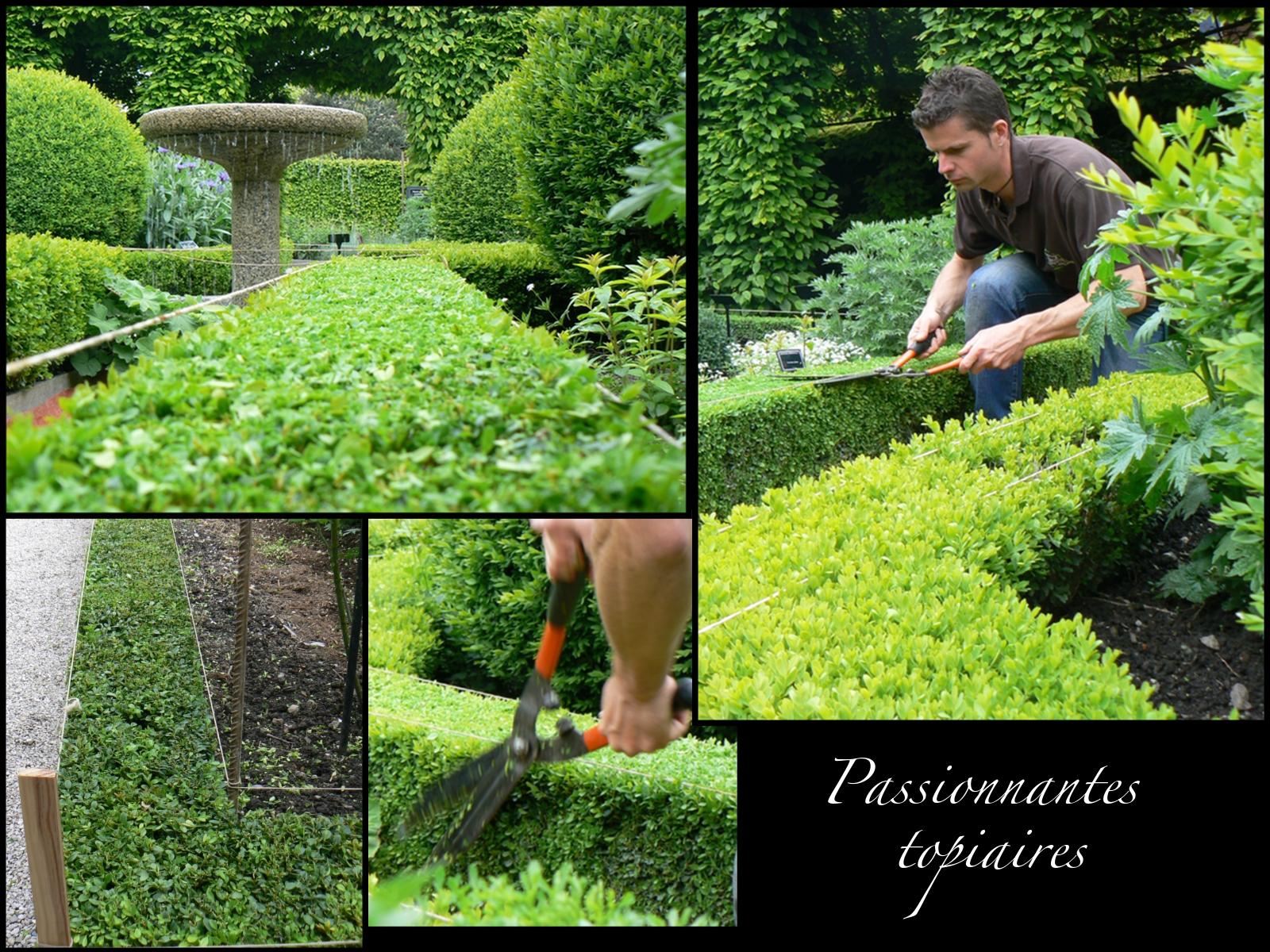 Taille des charmilles et taille des buis le jardin des for Recherche jardinier