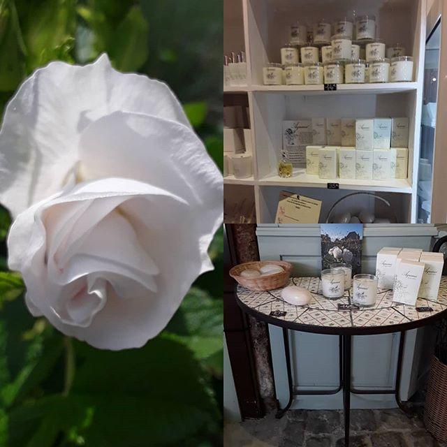 id e de cadeau parfum de rose le jardin des cinq sens. Black Bedroom Furniture Sets. Home Design Ideas