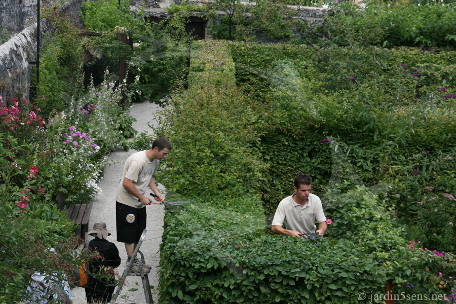 Taille des charmilles dans le Jardin des Cinq Sens d'Yvoire