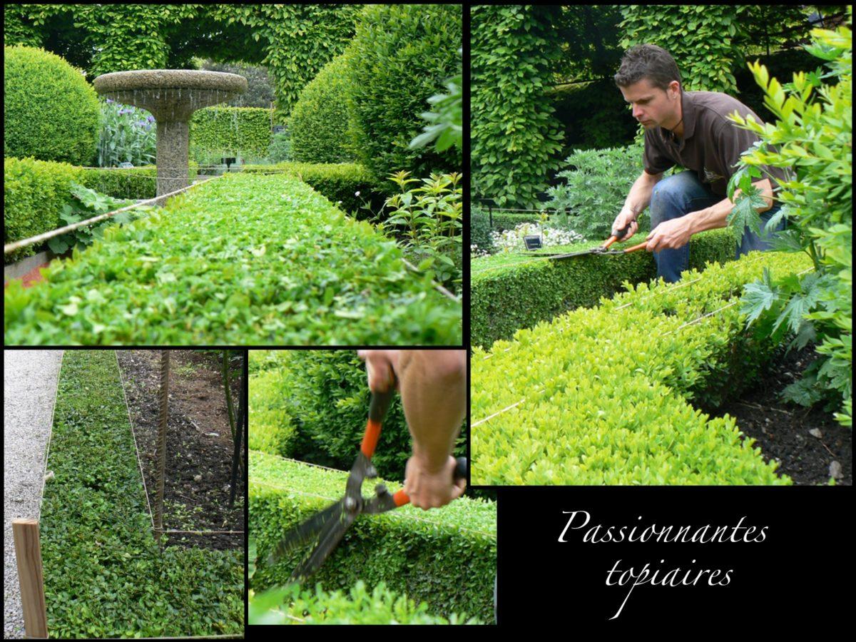 Taille des charmilles et taille des buis le jardin des - Jardin topiaire ...